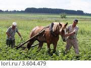 Купить «Пахарь», эксклюзивное фото № 3604479, снято 9 июля 2011 г. (c) Дмитрий Неумоин / Фотобанк Лори