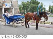 Купить «Конное такси на улицах Балахны», фото № 3630003, снято 24 июня 2012 г. (c) Александр Романов / Фотобанк Лори