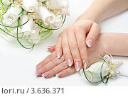 Купить «Красивые женские руки и букет белых роз», фото № 3636371, снято 18 февраля 2020 г. (c) Сергей Дашкевич / Фотобанк Лори