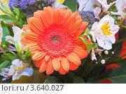 Купить «Гербера (Gerbera) в букете», эксклюзивное фото № 3640027, снято 4 мая 2010 г. (c) Алёшина Оксана / Фотобанк Лори