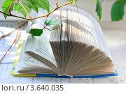 Купить «Раскрытый русско-английский словарь на окне», эксклюзивное фото № 3640035, снято 3 апреля 2010 г. (c) Алёшина Оксана / Фотобанк Лори