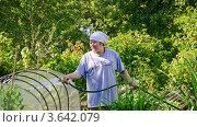 Купить «Женщина поливает огород из шланга», эксклюзивное фото № 3642079, снято 17 июня 2012 г. (c) Алёшина Оксана / Фотобанк Лори