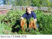 Купить «Женщина с морковкой в руках на даче», фото № 3644319, снято 5 сентября 2011 г. (c) Кекяляйнен Андрей / Фотобанк Лори
