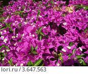 Купить «Фон из цветов», эксклюзивное фото № 3647563, снято 3 сентября 2010 г. (c) Михаил Карташов / Фотобанк Лори