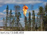 Газовый факел за деревьями. Сжигание попутного газа. Стоковое фото, фотограф Булат Каримов / Фотобанк Лори