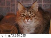 Рыжая кошечка. Стоковое фото, фотограф Денис Сураев / Фотобанк Лори