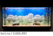 Аквариум (2010 год). Редакционное фото, фотограф Дмитрий Сарычев / Фотобанк Лори