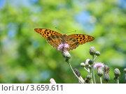 Бабочка сидит на цветке. Стоковое фото, фотограф Андрей Дюжечкин / Фотобанк Лори