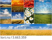 Коллаж из летних фотографий. Стоковое фото, фотограф Владимир Мельников / Фотобанк Лори