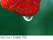 Клубника. Стоковое фото, фотограф Марат Сафаров / Фотобанк Лори