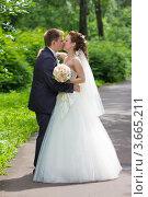 Купить «Жених и невеста целуются в летнем парке», фото № 3665211, снято 16 июня 2012 г. (c) Сергей Лаврентьев / Фотобанк Лори