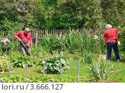Купить «Мужчина и женщина на садовом участке», эксклюзивное фото № 3666127, снято 24 июня 2012 г. (c) Алёшина Оксана / Фотобанк Лори