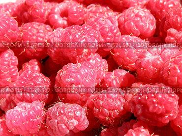 Купить «Множество ягод малины», фото № 3671507, снято 1 июля 2012 г. (c) Игорь Кутателадзе / Фотобанк Лори