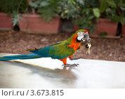 Купить «Попугай держит в клюве ключи», фото № 3673815, снято 23 апреля 2012 г. (c) Наталья Волкова / Фотобанк Лори