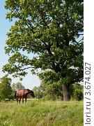 Лошадь. Стоковое фото, фотограф Александр Бурштын / Фотобанк Лори