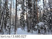 В лесу. Стоковое фото, фотограф Юлия Науменко / Фотобанк Лори