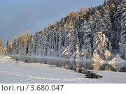 Сибирские ели. Стоковое фото, фотограф Юлия Науменко / Фотобанк Лори