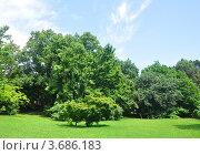 Купить «Тропический парк, Сочи, дендрарий», фото № 3686183, снято 8 июля 2012 г. (c) Анна Мартынова / Фотобанк Лори