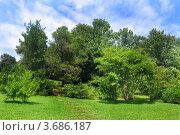 Купить «Зеленый парк в сочинском дендрарии», фото № 3686187, снято 8 июля 2012 г. (c) Анна Мартынова / Фотобанк Лори