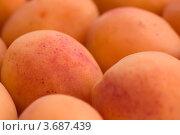 Купить «Абрикосы», фото № 3687439, снято 21 июля 2012 г. (c) Екатерина Рыбина / Фотобанк Лори