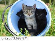 Домик для котят. Стоковое фото, фотограф Арти Homa / Фотобанк Лори