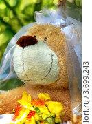 Плюшевый мишка в фате (2012 год). Редакционное фото, фотограф Светлана Симонова / Фотобанк Лори