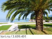 Купить «Летний парк с пальмами на берегу моря (Черногория)», фото № 3699491, снято 22 июня 2012 г. (c) Юрий Брыкайло / Фотобанк Лори