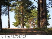 Поляна в лесу. Стоковое фото, фотограф Ольга А. / Фотобанк Лори