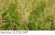 Купить «Панорамный вид травы», видеоролик № 3712147, снято 21 октября 2010 г. (c) Losevsky Pavel / Фотобанк Лори