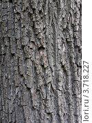 Текстура коры старого дерева. Стоковое фото, фотограф Андрей Артемьев / Фотобанк Лори