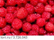 Купить «Ягода малина. Фон», фото № 3726043, снято 14 июля 2012 г. (c) Павел Кричевцов / Фотобанк Лори