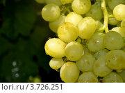 Ягоды белого винограда. Стоковое фото, фотограф Юлия Науменко / Фотобанк Лори