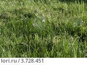 Мыльные пузыри на зеленой траве. Стоковое фото, фотограф Екатерина Слугина / Фотобанк Лори