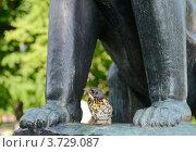 Купить «Под надежной защитой. Птенец рябинника.», фото № 3729087, снято 4 июля 2012 г. (c) Валерия Попова / Фотобанк Лори