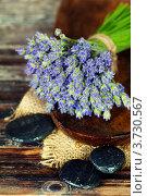 Купить «Свежие цветы лаванды и дзен камни на деревянной поверхности», фото № 3730567, снято 31 мая 2012 г. (c) Наталия Кленова / Фотобанк Лори