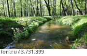 Купить «Вода потоком течет среди зеленого леса», видеоролик № 3731399, снято 7 апреля 2011 г. (c) Losevsky Pavel / Фотобанк Лори