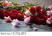 Купить «Букеты цветов возле памятника. 9 мая», фото № 3732951, снято 9 мая 2012 г. (c) Morgenstjerne / Фотобанк Лори