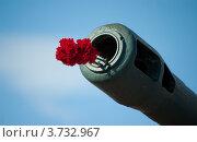 Купить «Красные гвоздики в пушечном стволе на фоне неба», фото № 3732967, снято 9 мая 2012 г. (c) Morgenstjerne / Фотобанк Лори