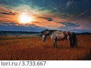 Купить «Лошадь в поле на закате», фото № 3733667, снято 1 июля 2007 г. (c) Julia Shepeleva / Фотобанк Лори