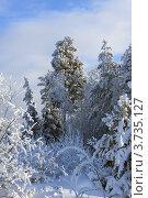 Зимний пейзаж. Опушка хвойного леса. Стоковое фото, фотограф Буздина Александра / Фотобанк Лори