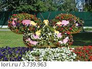 Купить «Цветочное панно в парке города Одинцово. Московская область», эксклюзивное фото № 3739963, снято 4 июля 2012 г. (c) lana1501 / Фотобанк Лори