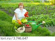 Купить «Пожилая женщина в саду с урожаем овощей», фото № 3746647, снято 14 июня 2012 г. (c) Яков Филимонов / Фотобанк Лори
