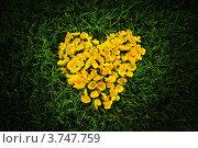 Сердце из желтых лютиков. Стоковое фото, фотограф Алексей Казнадей / Фотобанк Лори