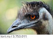 Купить «Голова страуса», фото № 3753011, снято 10 августа 2012 г. (c) Несинов Олег / Фотобанк Лори