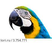 Купить «Попугай Ара (Ara ararauna)», фото № 3754771, снято 22 мая 2012 г. (c) ИВА Афонская / Фотобанк Лори