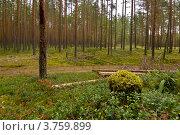 Тропинка в лесу. Стоковое фото, фотограф Коршунов Владимир / Фотобанк Лори