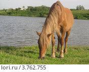 Лошадь на берегу озера. Стоковое фото, фотограф Александр Ежов / Фотобанк Лори