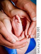 Купить «Ножка новорожденного в родительских руках», фото № 3769991, снято 20 августа 2012 г. (c) Ольга Денисова / Фотобанк Лори