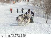 Купить «Елизовский спринт на собачьих упряжках, 2012 год. Камчатка», фото № 3772859, снято 3 марта 2012 г. (c) Владимир Карпов / Фотобанк Лори