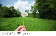 Купить «Рука держит одуванчик на фоне травы поля и леса», видеоролик № 3781527, снято 22 марта 2012 г. (c) Losevsky Pavel / Фотобанк Лори